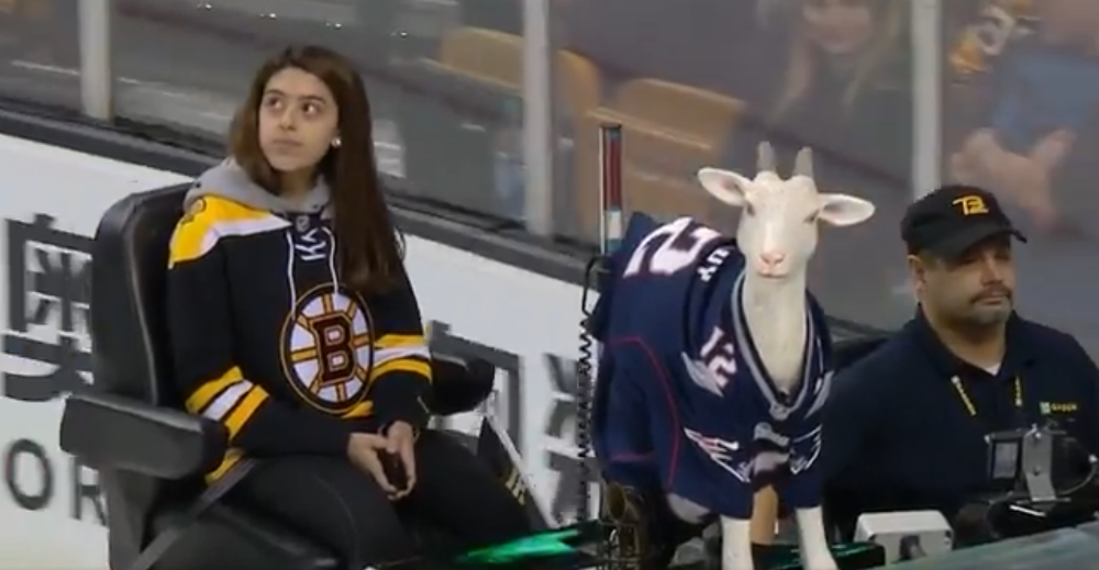 online store 30a50 3c476 Boston Bruins put a plastic goat in a Tom Brady jersey on ...